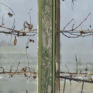 Annemarie-van-Hooff-CLoseUp-foto-op-dibond60x60cm-111