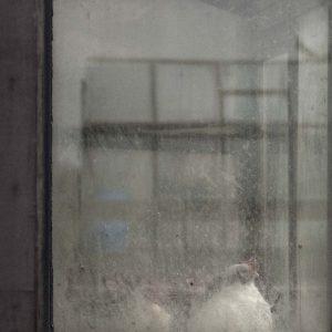 Annemarie-van-Hooff-CLoseUp-foto-op-dibond60x60cm-114