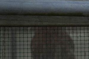Annemarie van Hooff 'Kip zonder kop'