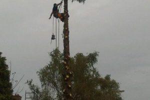 Annemarie van Hooff 'Man in een boom'