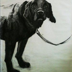 Annemarie-van-Hooff--Zwarte-hond-,-houtskool-op-doek