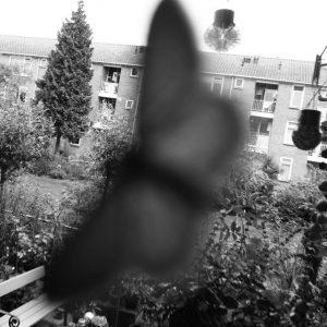 Annemarie van Hooff uit-zicht nachtvlinder