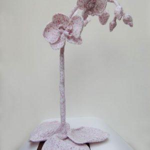 Annemarie-vanHooff--Orchide-